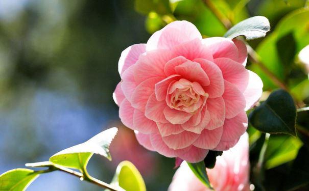 冬天养什么花 9种冬季也能开花的植物