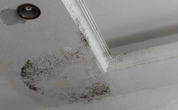 天花板发霉难看又影响健康 告诉你原因和处理方法