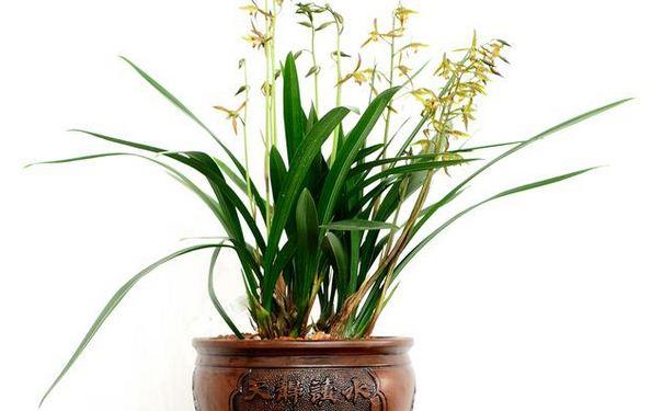 众易居装修网 装修知识 > 兰花养殖方法   梅兰水仙菊花被称为我国