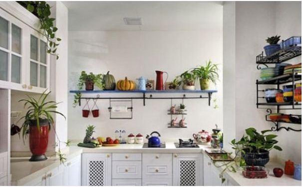 小户型厨房摆放什么植物好 小户型厨房植物摆放风水