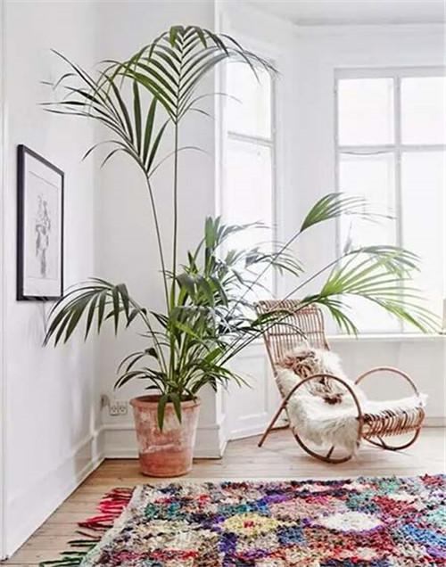 客厅摆放什么植物招财_客厅适合摆放的十大植物_客厅适合摆放什么干花