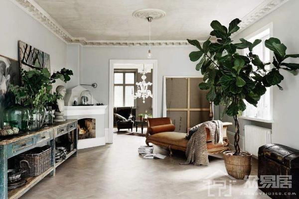 客厅植物摆放风水禁忌大全 客厅摆放什么植物风水好