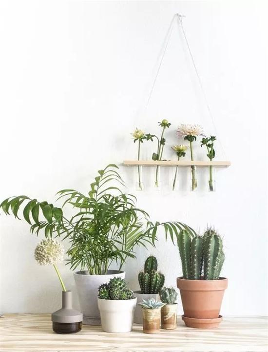 绵阳软装如何设计 绵阳绿植家装