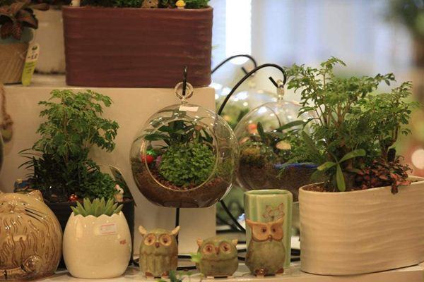 呼和浩特新房装修如何选择绿植?