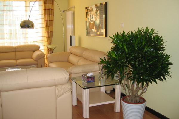 客厅怎么摆放植物 客厅绿植设计